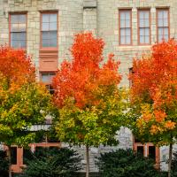 Trees turning autumn colors in Perelman Quadrangle
